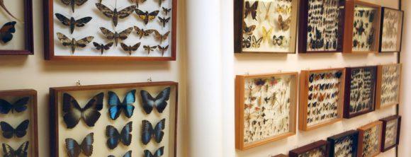 выставка в доме бабочек